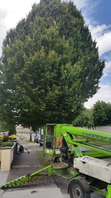 Acorn Tree Services Ltd